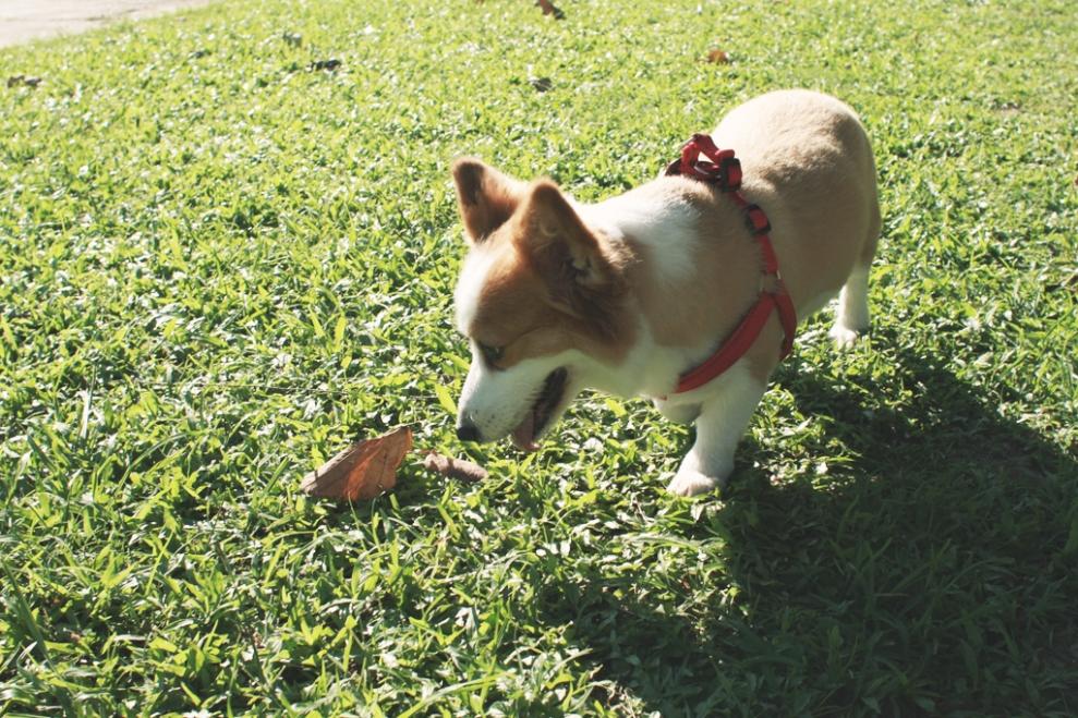 curiousdog