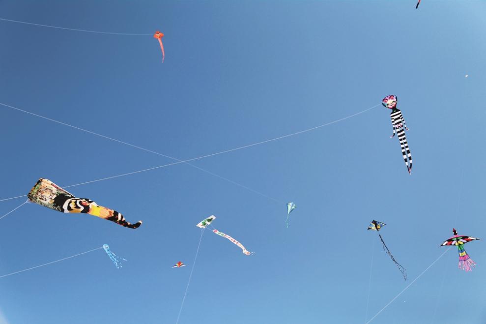 """<img src=""""festival-of-the-winds-bondi-2014.jpg"""" alt=""""festival of the winds bondi 2014"""" />"""