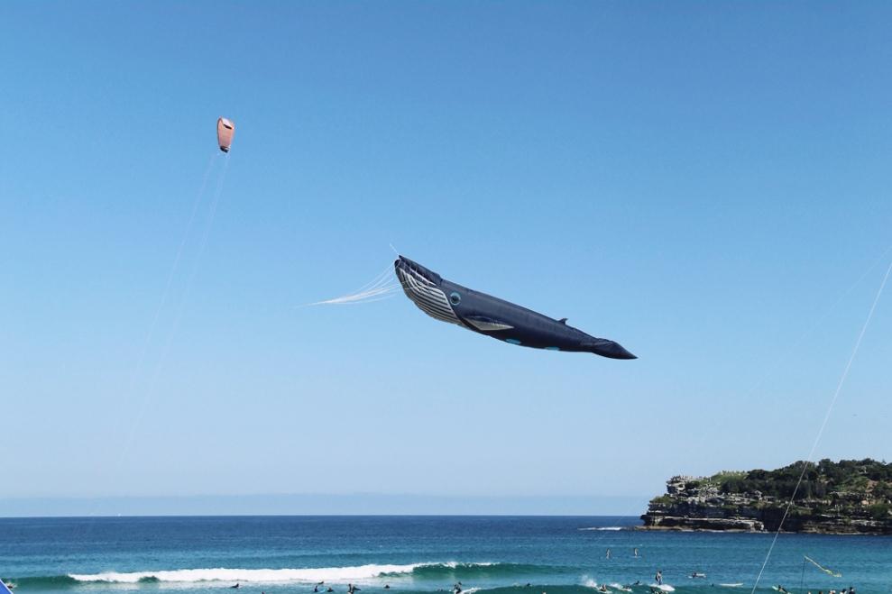 """<img src=""""whale-kite.jpg"""" alt=""""Whale Kite"""" />"""